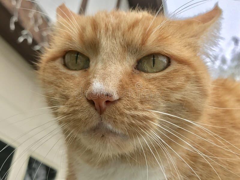 Domestic Cat Outdoor Portrait Free Public Domain Cc0 Image