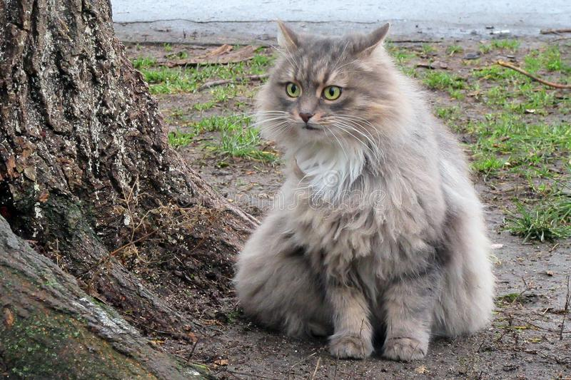 Domestic cat outdoors. Wild cats in nature. Cute cat on the tree. Neighborhood cat. Rough angry tom cat sitting outside. Domestic cat outdoors. Wild cats in royalty free stock image