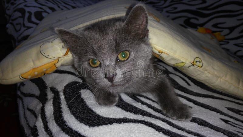 Domestic cat stock photos
