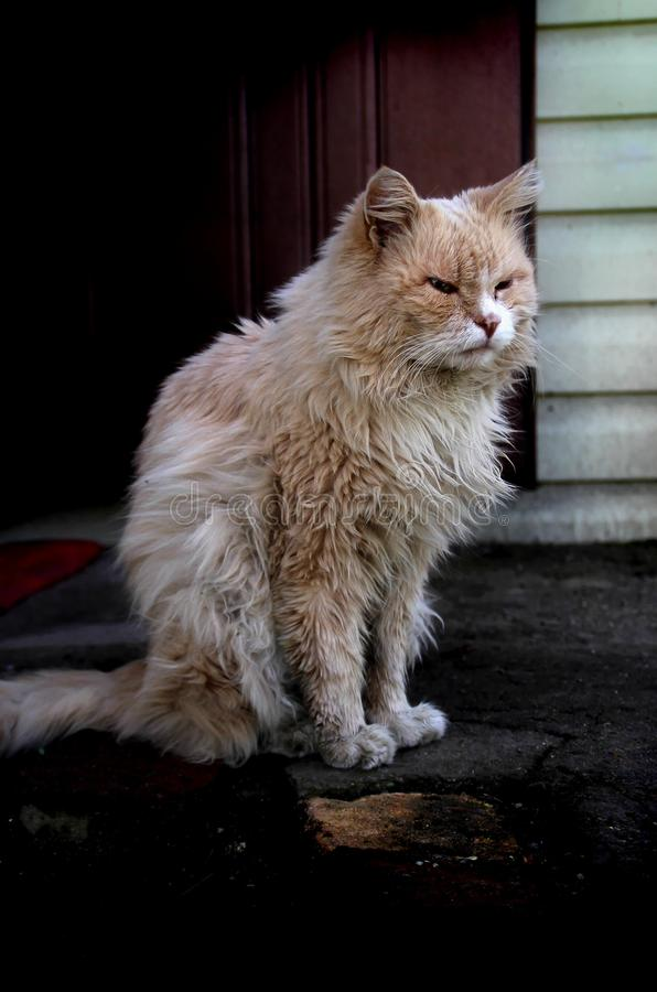 Domestic cat. Photo of domestic cat outside the house royalty free stock photography