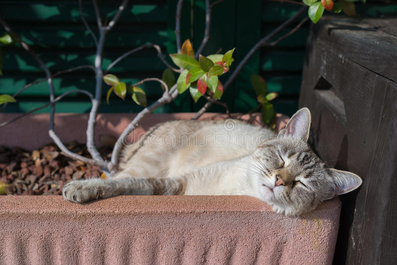 Domestic cat playing outdoors. Playful domestic cat playing outdoors in home garden and looking at the camera. Natural light, shallow depth of field, focused on royalty free stock photos