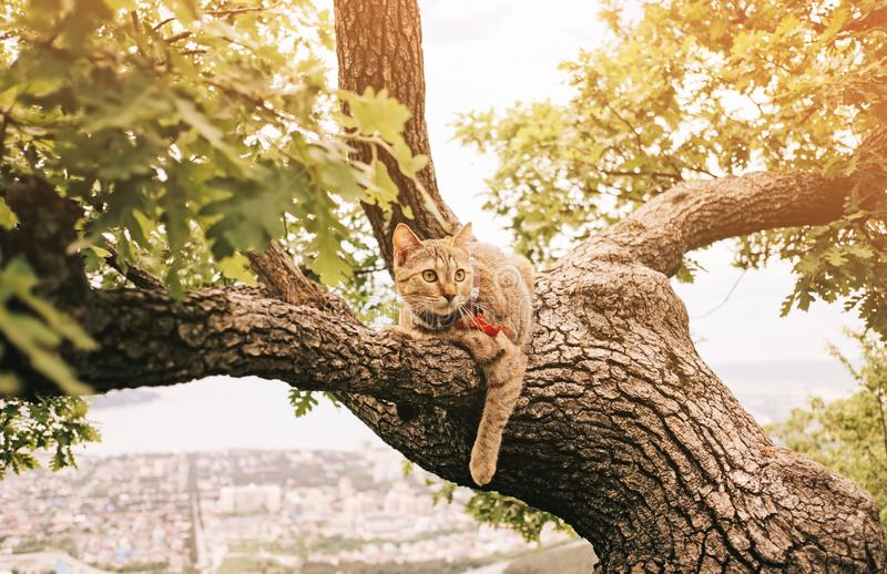 Domestic cat resting on tree in summer outdoor. Domestic cat of ginger color resting on tree in summer outdoor stock images