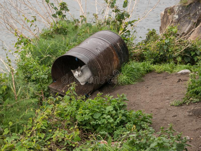 Domestic cat shelters from rain in an old metal barrel. On the banks of the River Douro in Porto, Portugal stock photo