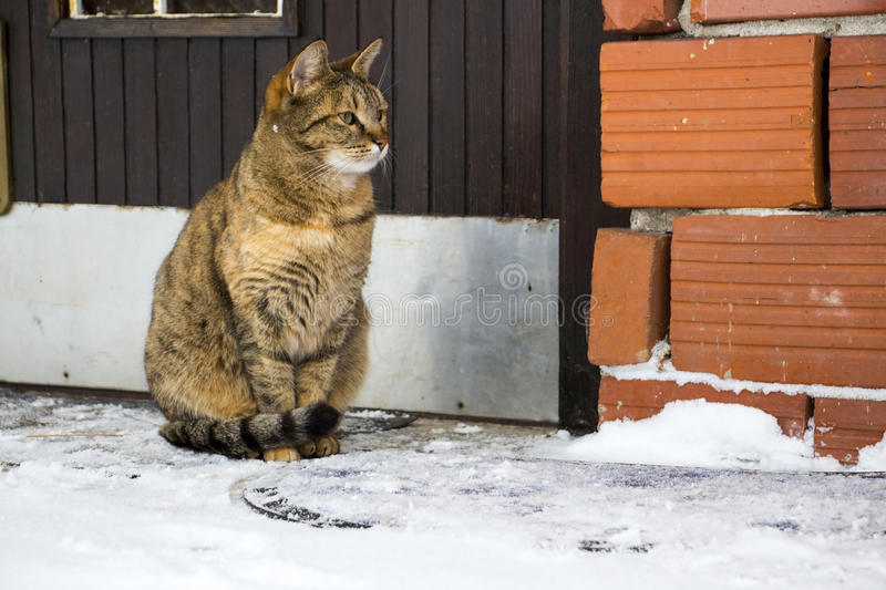 Download Domestic cat stock image. Image of animal, winter, wall - 86702371