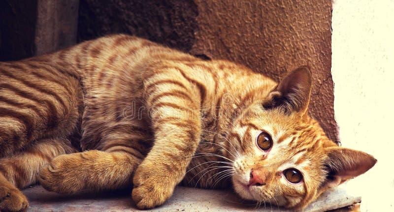 Domestic Cat On Stoop Free Public Domain Cc0 Image
