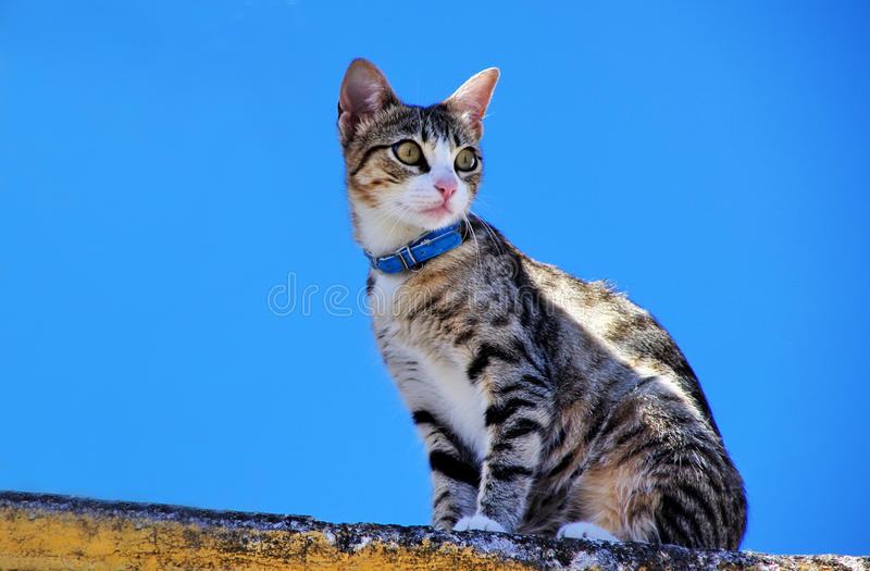 Domestic cat in wall. Blue sky stock photography