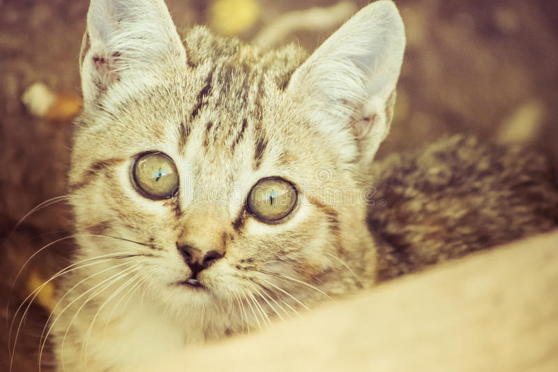 Domestic cats. In the countryside royalty free stock photography