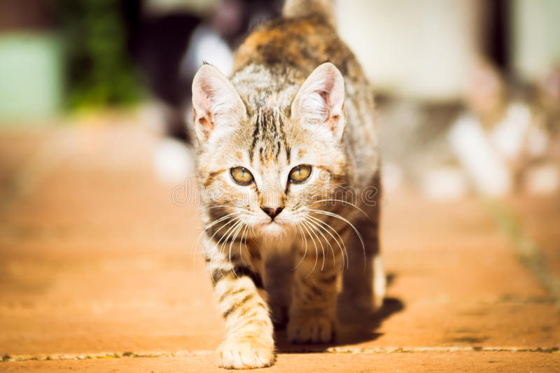 Domestic cats. In the countryside royalty free stock images