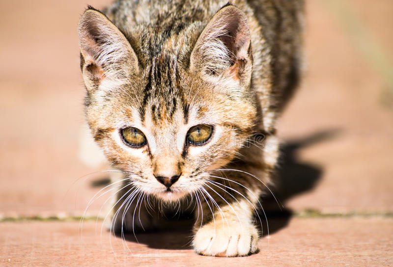 Domestic cats. In the countryside stock photography