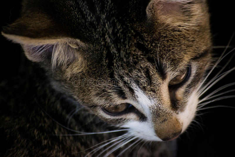 Domestic cats. In the countryside royalty free stock photo