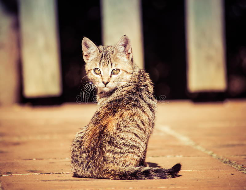 Domestic cats. In the countryside stock photos