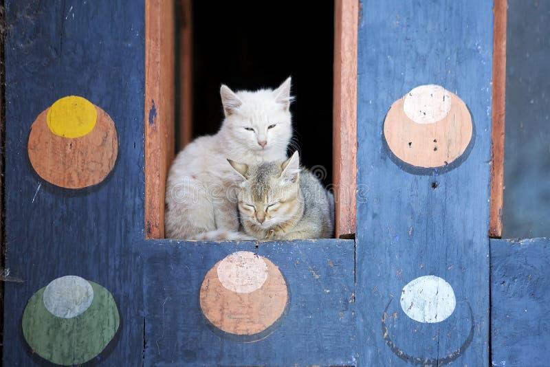 Domestic cats (felis catus) at the Kurjey Lhakhang, Bhutan royalty free stock photo