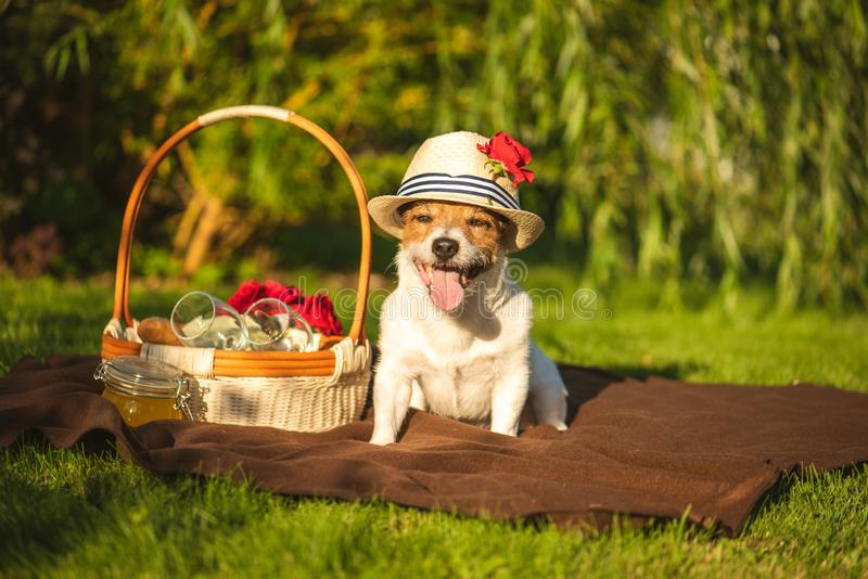Domestic dog at picnic at sunny summer day royalty free stock images