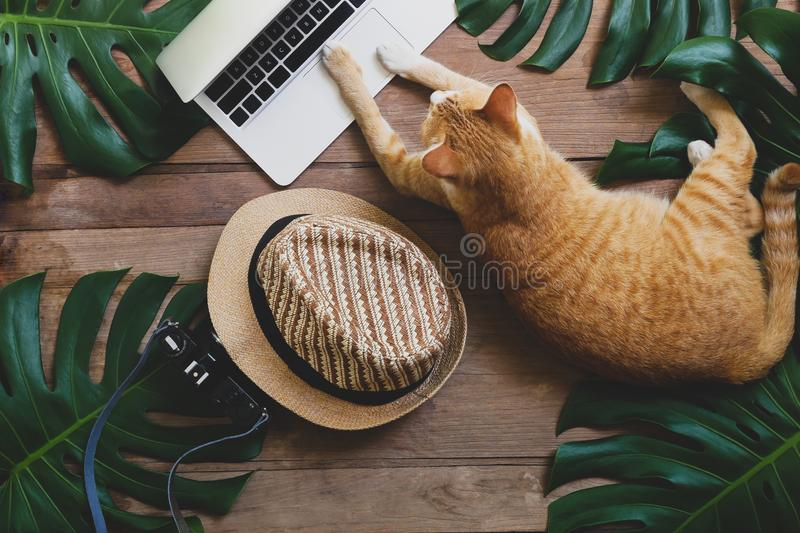 Domestic ginger cat acts as human working on laptop computer on. Rustic wood grunge background with tropical leaves Monstera, hat and retro style camera stock photography