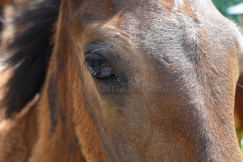 Domestic horse in the village. Natural farming. Country Life Concept royalty free stock photography