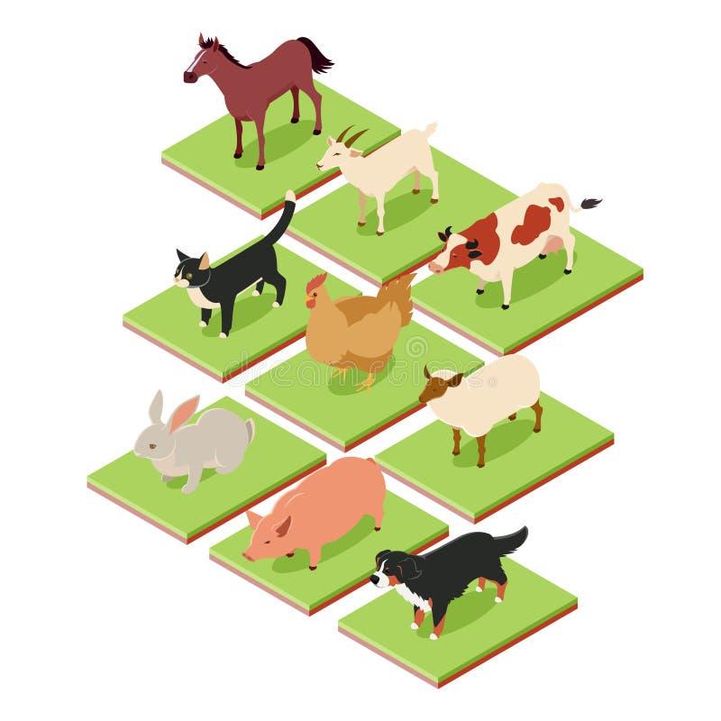 Domestic isometric animals vector illustration