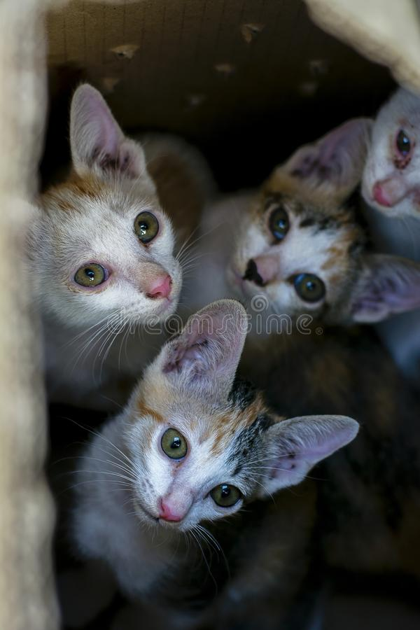 Domestic kitty cats in brown paper box. Curious group of cute small domestic kitty cats in brown paper box there are look like they stay in the hole or black stock photo