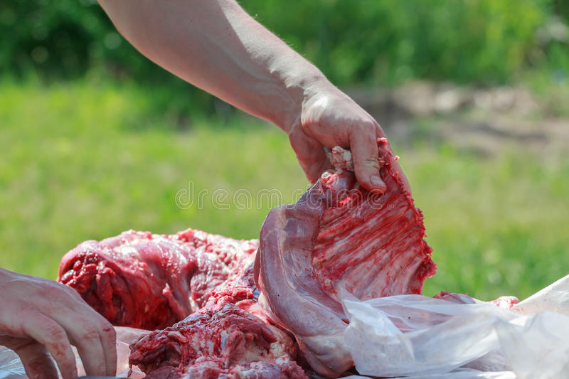 Domestic lamb carcass butchered into smaller cuts. Domestic lamb carcass is butchered into smaller cuts royalty free stock images