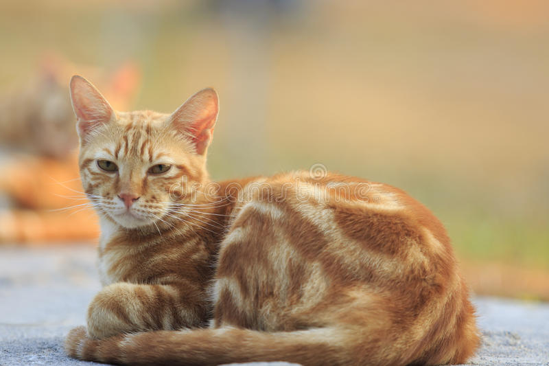 Domestic orange fur cat relaxing in park with beautiful morning royalty free stock photos