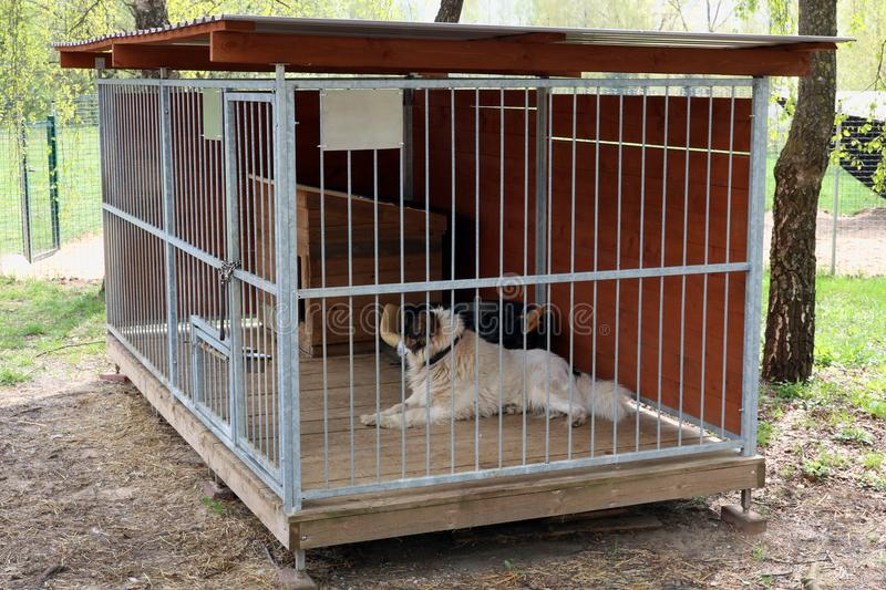 Domestic pet old dog lives in a steel cage stock photos
