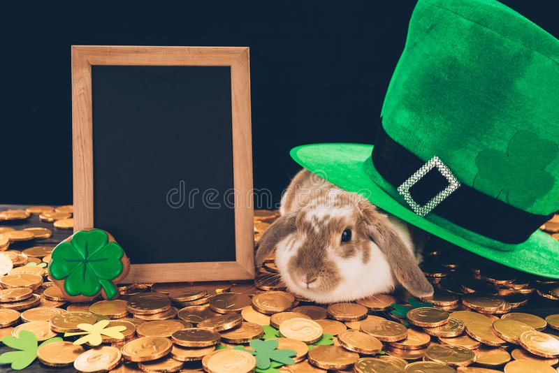 Domestic rabbit sitting on golden coins under green hat, st patricks day concept stock image