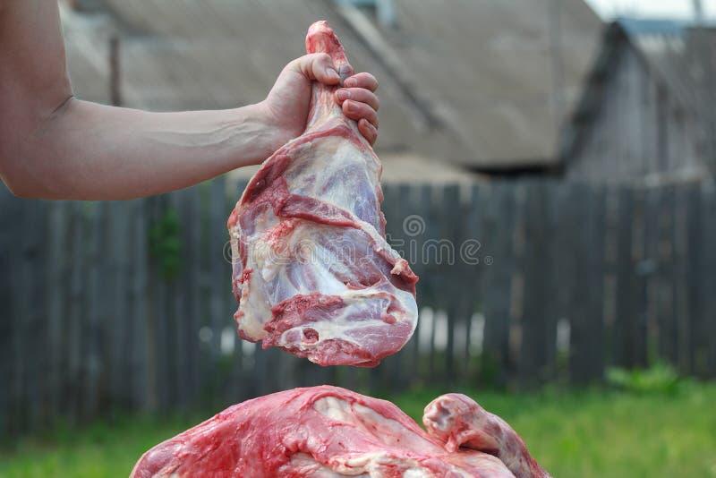 Domestic sheep leg butchered in local farm. Domestic sheep leg is butchered in local farm royalty free stock photo