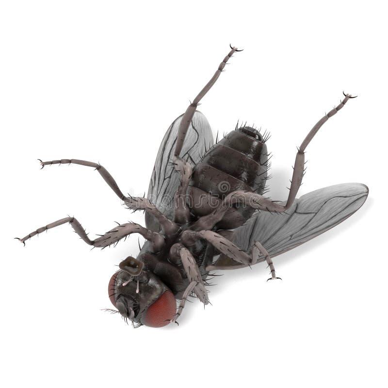 Domestica del Musca - mosca común stock de ilustración