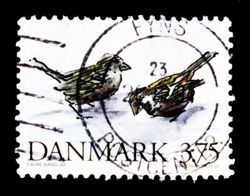 Domesticus del passante del passero, serie danese minacciato degli animali, circa 1994 fotografia stock libera da diritti