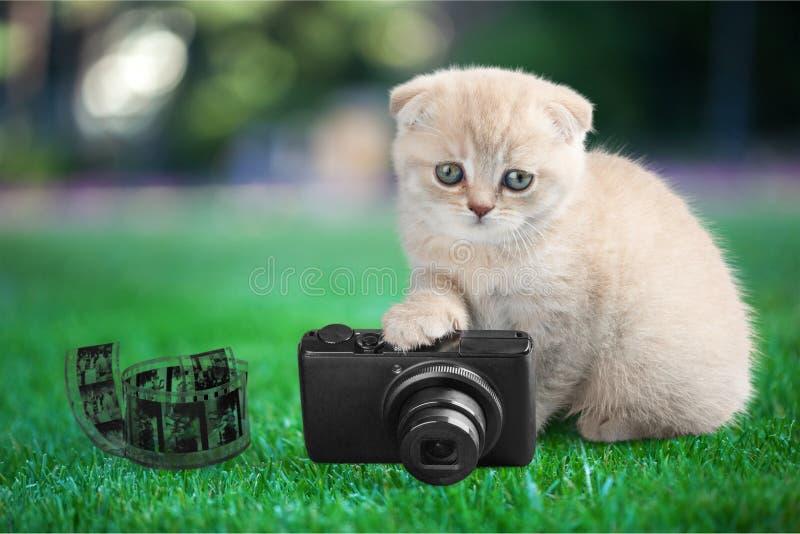 1 domestique photographie stock libre de droits