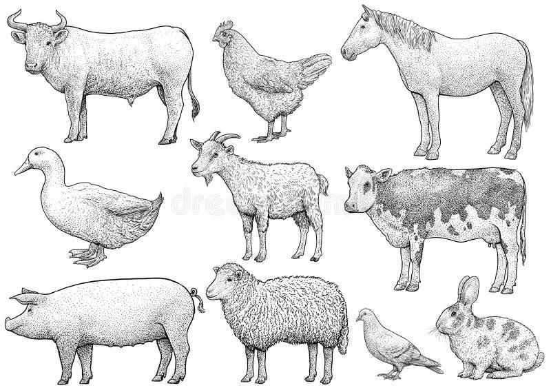 Domestique, cultivant, collection animale, illustration, dessin, gravure, encre, schéma, vecteur illustration libre de droits