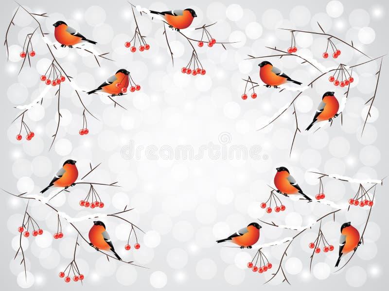 Domherrefåglar på filialvinterbakgrund royaltyfri illustrationer
