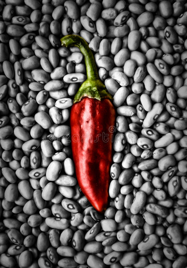 Dominant Pepper royalty free stock image