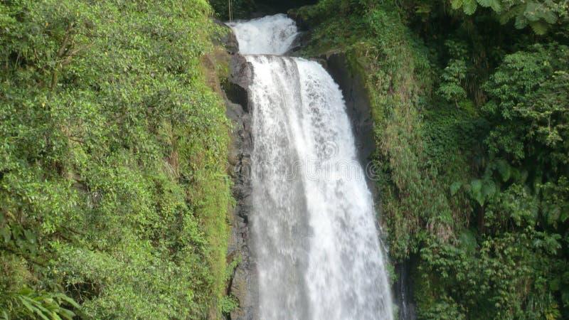 Dominica ( Caribbean) - Trafalgar-Fälle - Morne Trois Pitons NP stockfotos