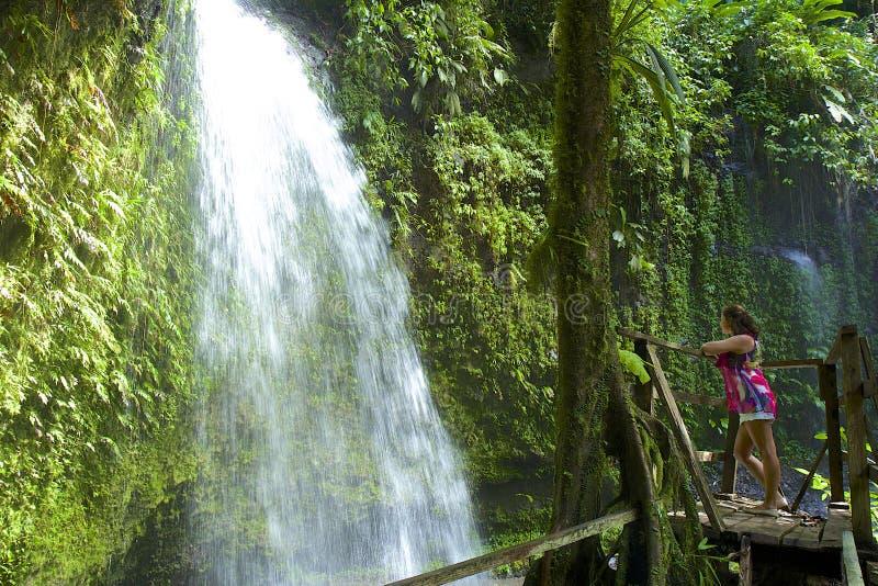 Dominica waterval stock foto