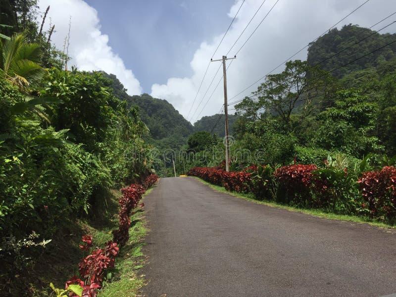 Dominica wody siklawy podwyżka zdjęcie stock