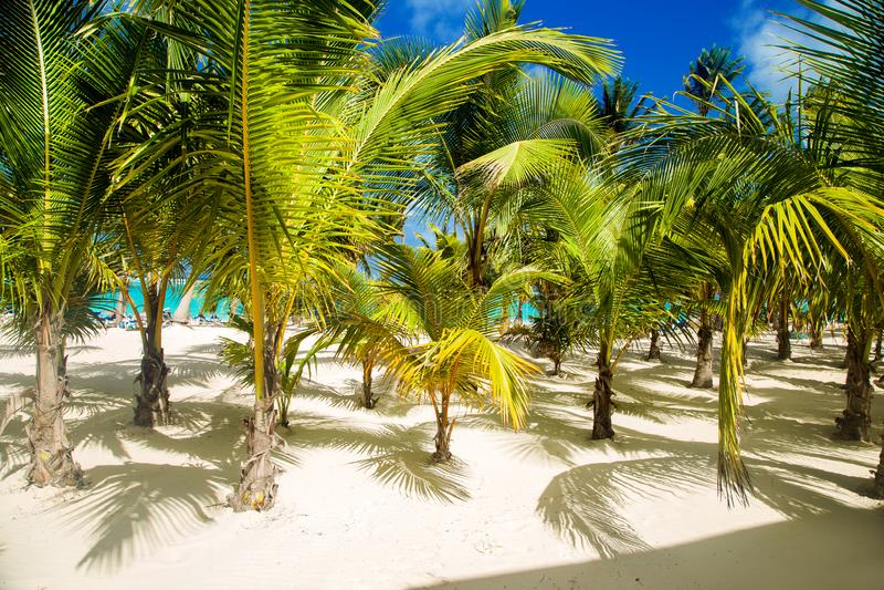 Dominican Republic, Punta cana, Saona Island - Mano Juan Beach. Fishermen`s village stock photos