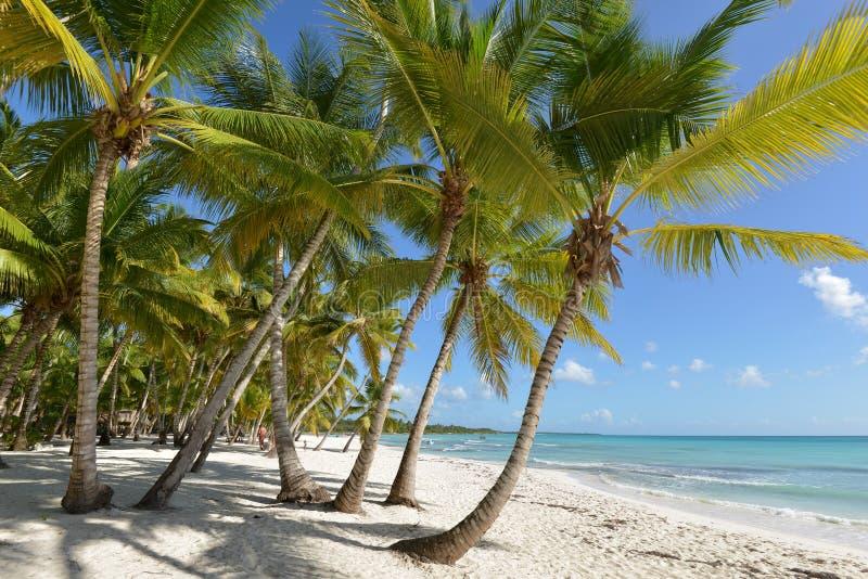 Dominican Republic, Saona Island. Caribbean coast of Saona Island royalty free stock photo