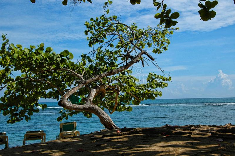 Dominikanische Republik, Maimon-Bucht, verdrehter Baum auf der Küstenlinie, stockfoto
