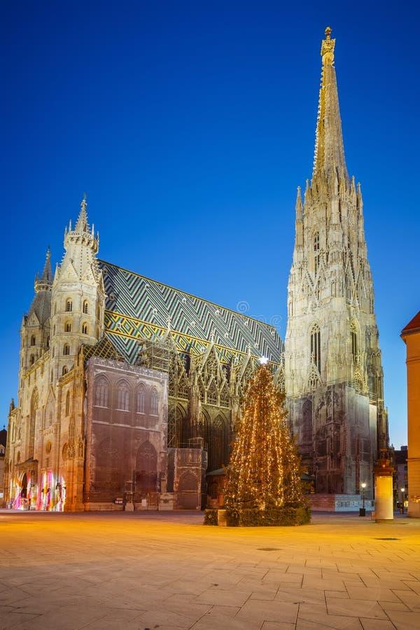 Domkyrka för St. Stephan och julträd royaltyfria bilder