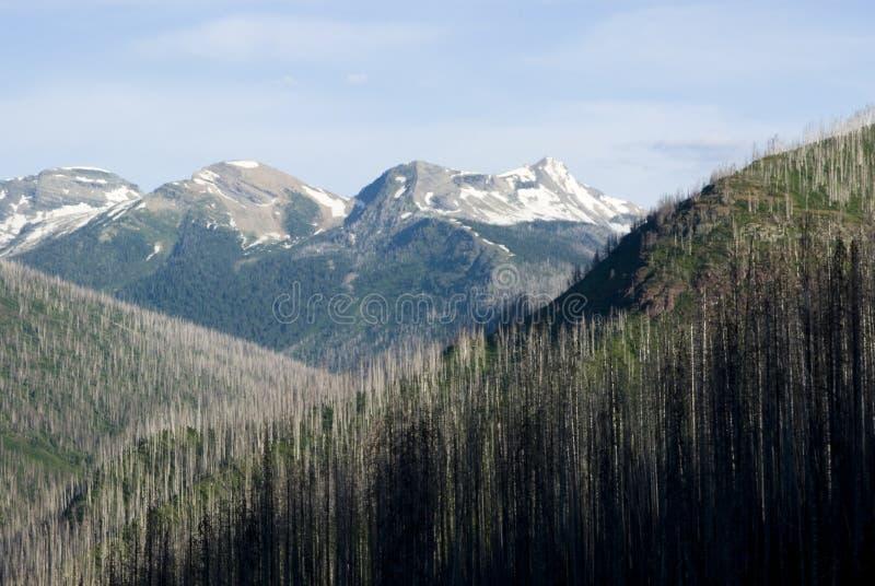 Dommages de fireire de forêt photos libres de droits