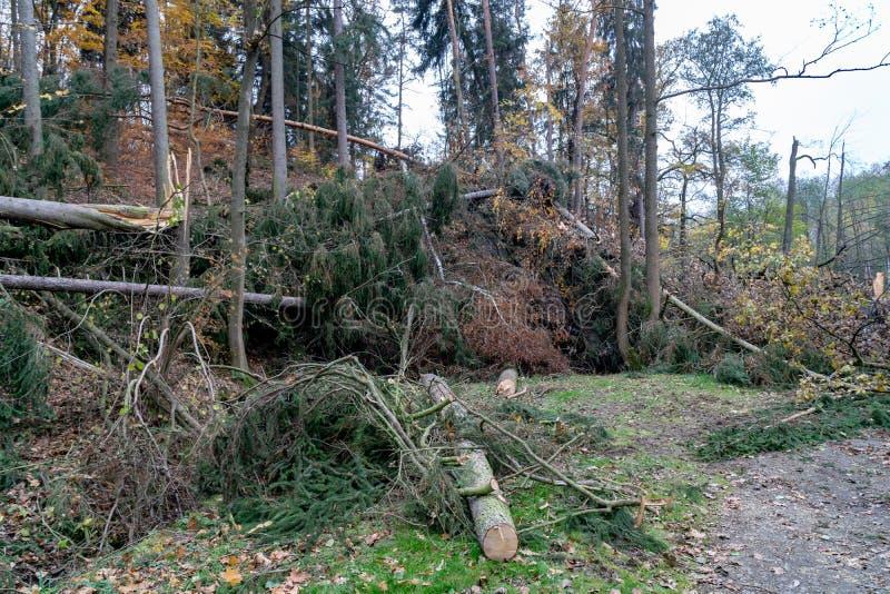 Dommages de ventis ou de tempête après une tornade dans la forêt photo libre de droits
