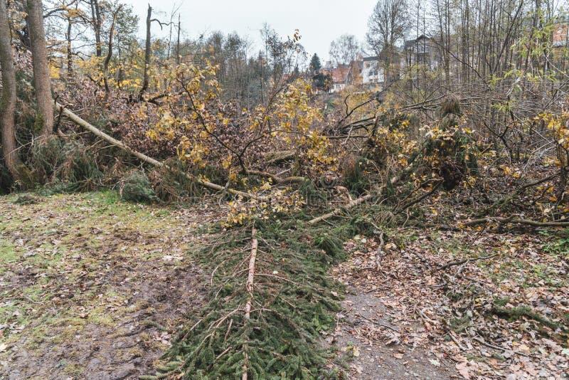 Dommages de ventis ou de tempête après une tornade dans la forêt photos libres de droits