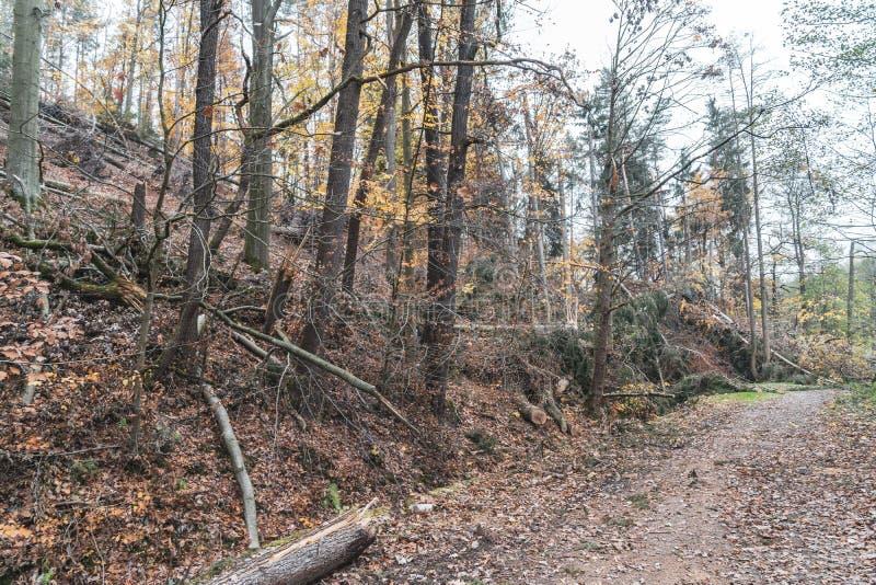 Dommages de ventis ou de tempête après une tornade dans la forêt photo stock