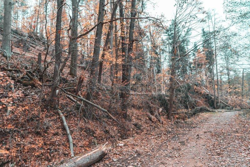 Dommages de ventis ou de tempête après une tornade dans la forêt photos stock