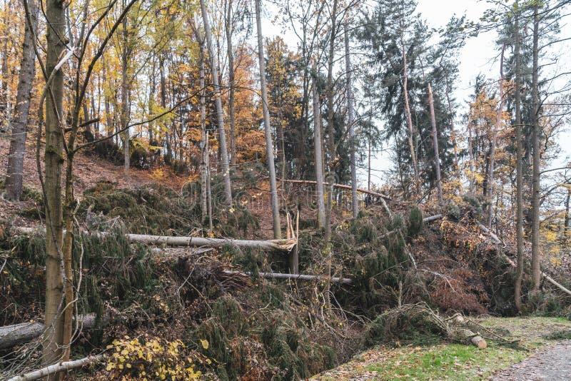 Dommages de ventis ou de tempête après une tornade dans la forêt image libre de droits