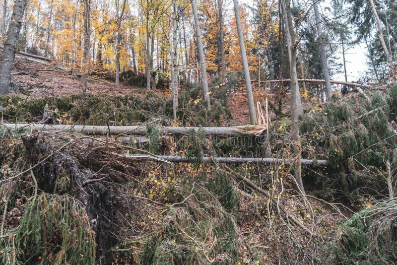Dommages de ventis ou de tempête après une tornade dans la forêt images libres de droits
