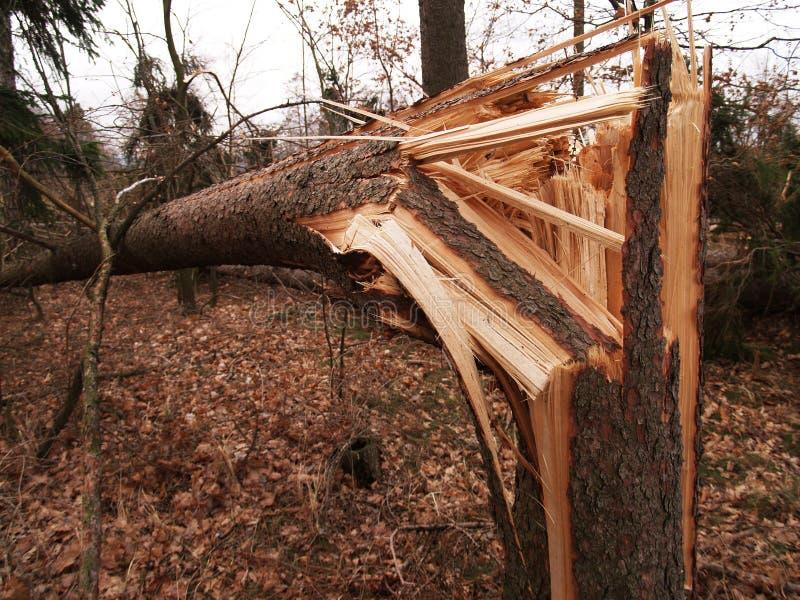 Dommages de Windstorm image libre de droits