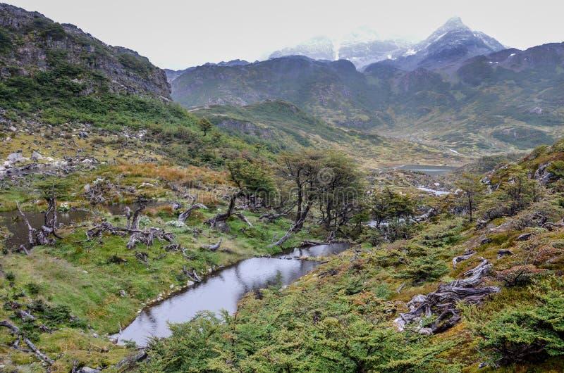 Dommages faits par les castors et le barrage de castor en Dientes de Navarino, Isla Navarino, Chili image libre de droits
