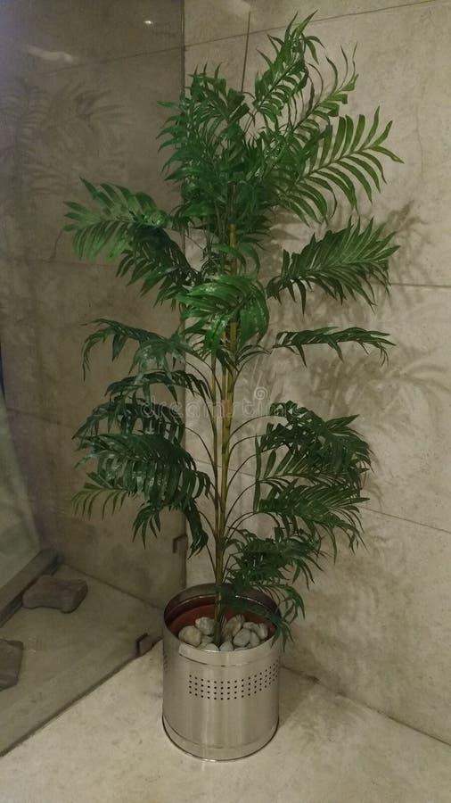Domowa Roślina fotografia stock