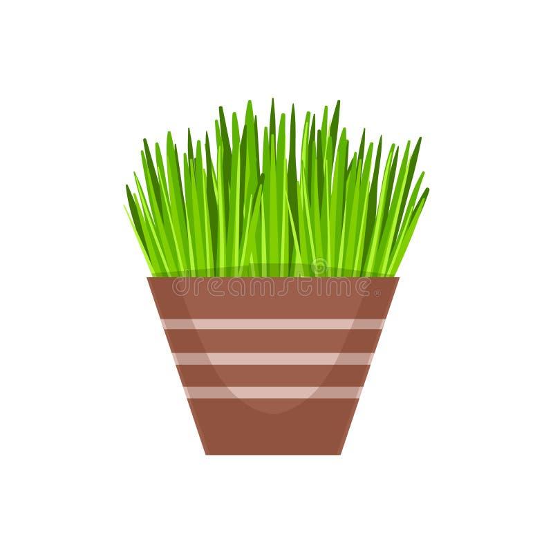 Domowa trawy roślinność W Flowerpot, kwiatu sklepu rośliien asortymentu rzeczy kreskówki wektoru Dekoracyjna ilustracja ilustracji